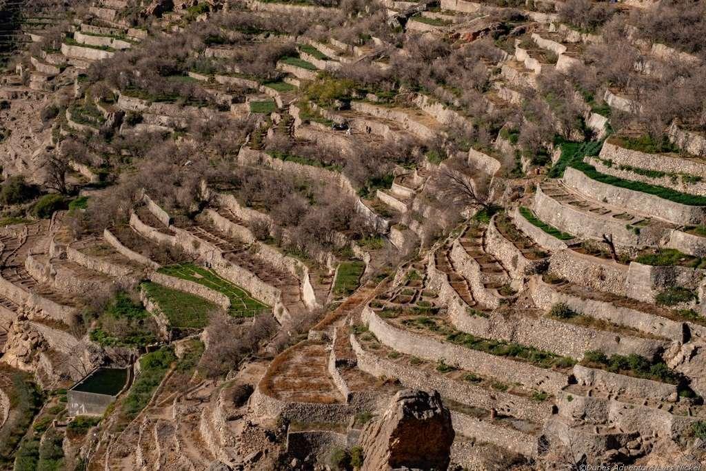 Terrassenfelder am Jebel Akhdar, Oman